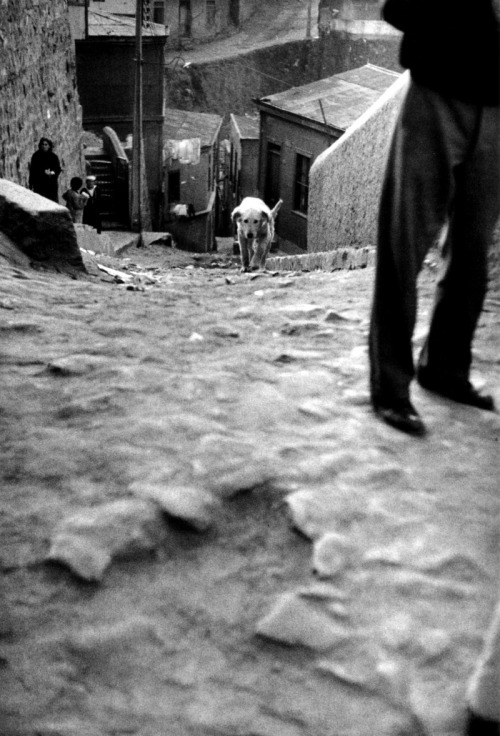 m3zzaluna:  valparaíso, chile, 1963 photo by sergio larrain, from valparaíso ***please don't repost this as your own
