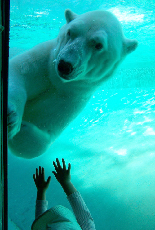 imprecise:  Bearly Reaching (by yumikid)