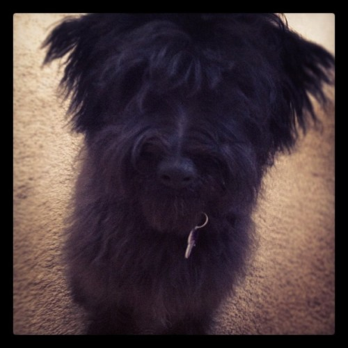 #fluffy Booboo (Taken with instagram)