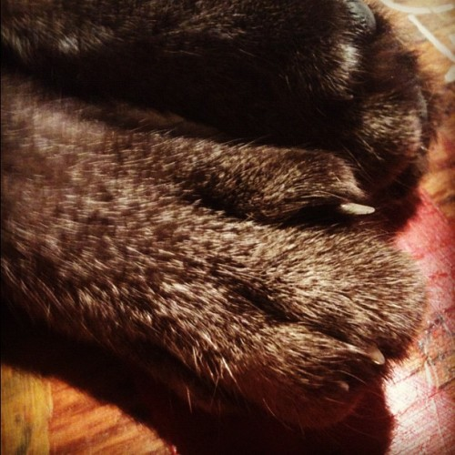 #kitty #catpaws #cute (Taken with instagram)