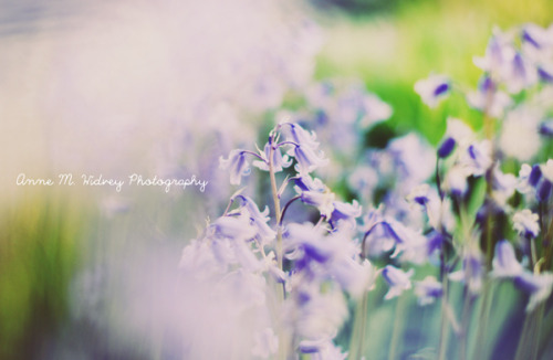 Summer is here on Flickr.Anne Marthe Widvey Photography