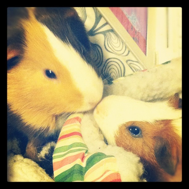 Best Friends (Taken with instagram)
