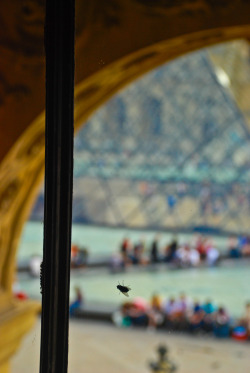 sfmoma:  SUBMISSION: Parisian Fly at the Louvre by Adeo Alday