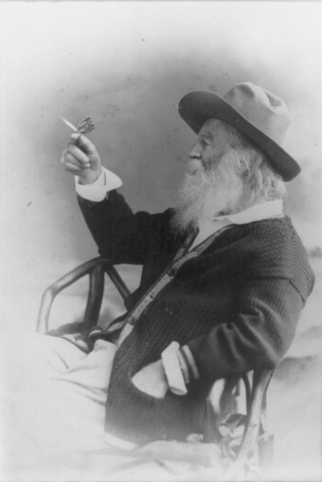 "indigodreams:  bartleby-company: Portrait of Walt Whitman with butterfly, 1877 - by Catherine Turcich-Kealey ""Not for a moment, beautiful aged Walt Whitman, have I failed to see your beard full of butterflies."" - Federico Garcia Lorca"