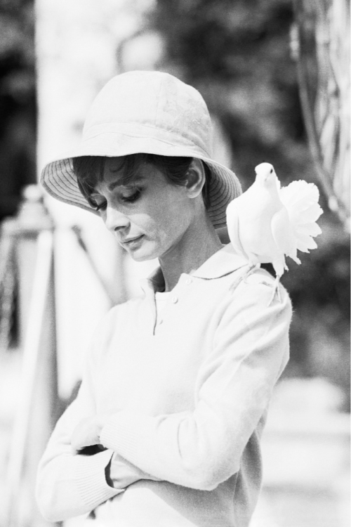 Audrey Hepburn photographed by Terry O'Neill on the set of Two for the Road, 1967.