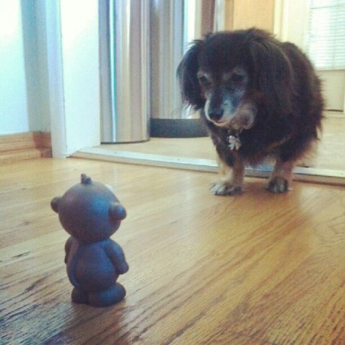 Staring Contest #cutedog #staring #monkey @nickiweathersby #violet (Taken with instagram)