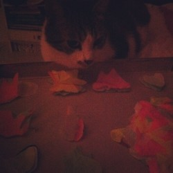 Neko is jealous of confettis. (Pris avec instagram)