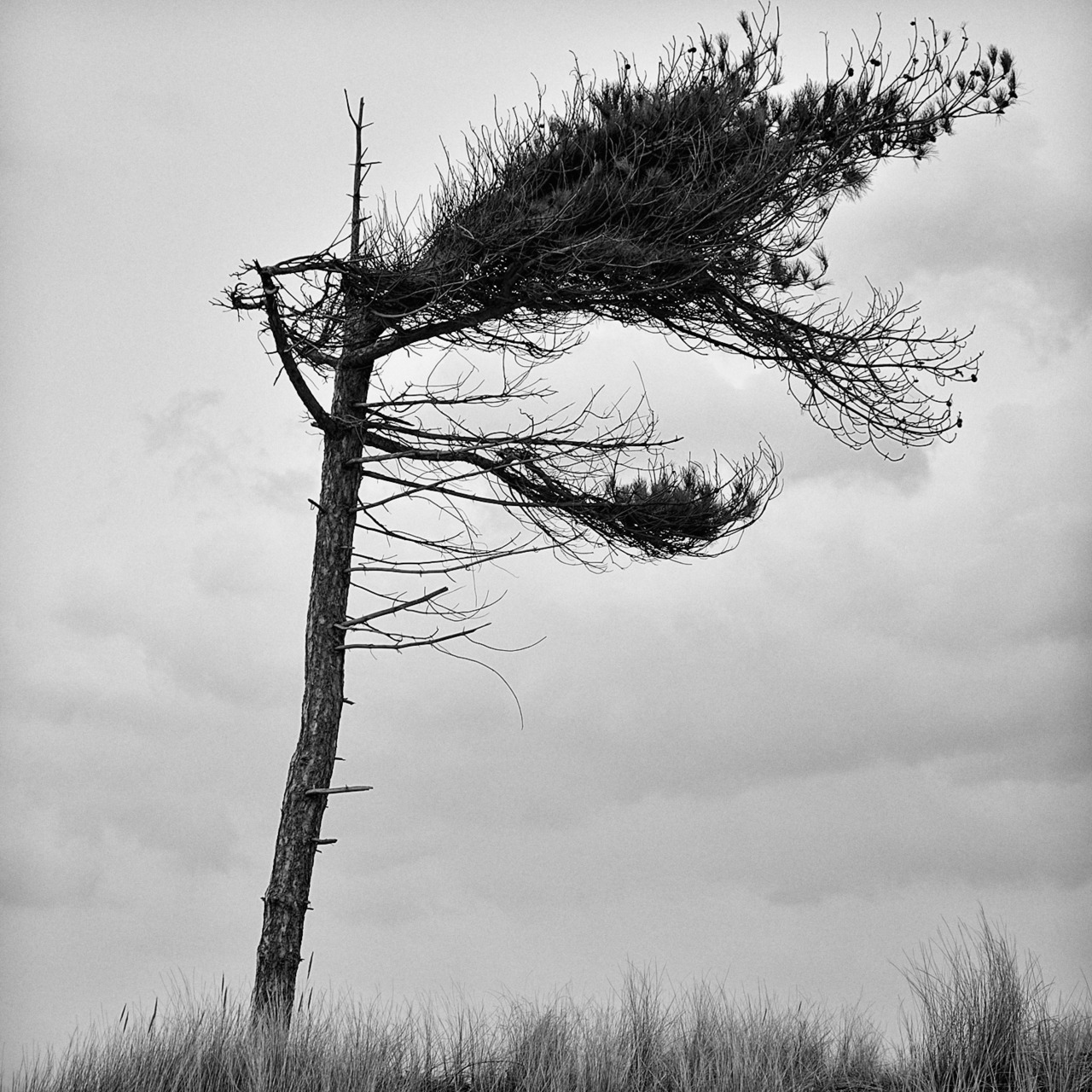 Random Photo #39… Wind blown, Formby, Merseyside