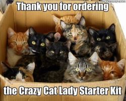 funny meme cats picture Crazy cat lady