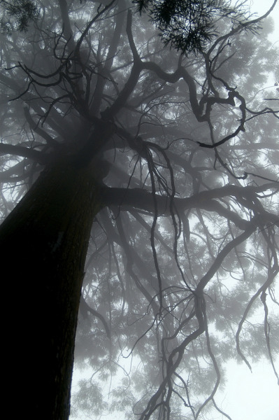 archenland:  a huge tree in Lushan (by shenxy)