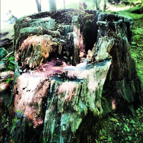 Pretty stump (Taken with instagram)