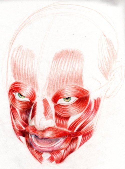 obedezcan:  Color study of face muscles on a girl. Child by ~galphath