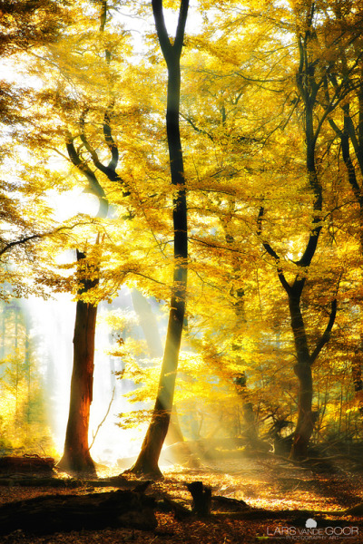 archenland:  yellow (by larsvandegoor.com)