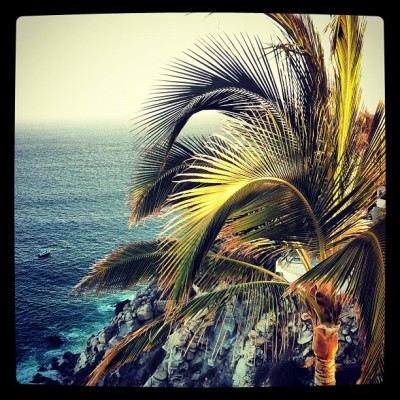 Palm tree in paradise - Cabo (Taken with instagram)