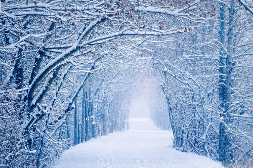 unknownskywalker:  undisclosed desires by Viktoria Haack  I feel like I always want it to be the season that it isn't