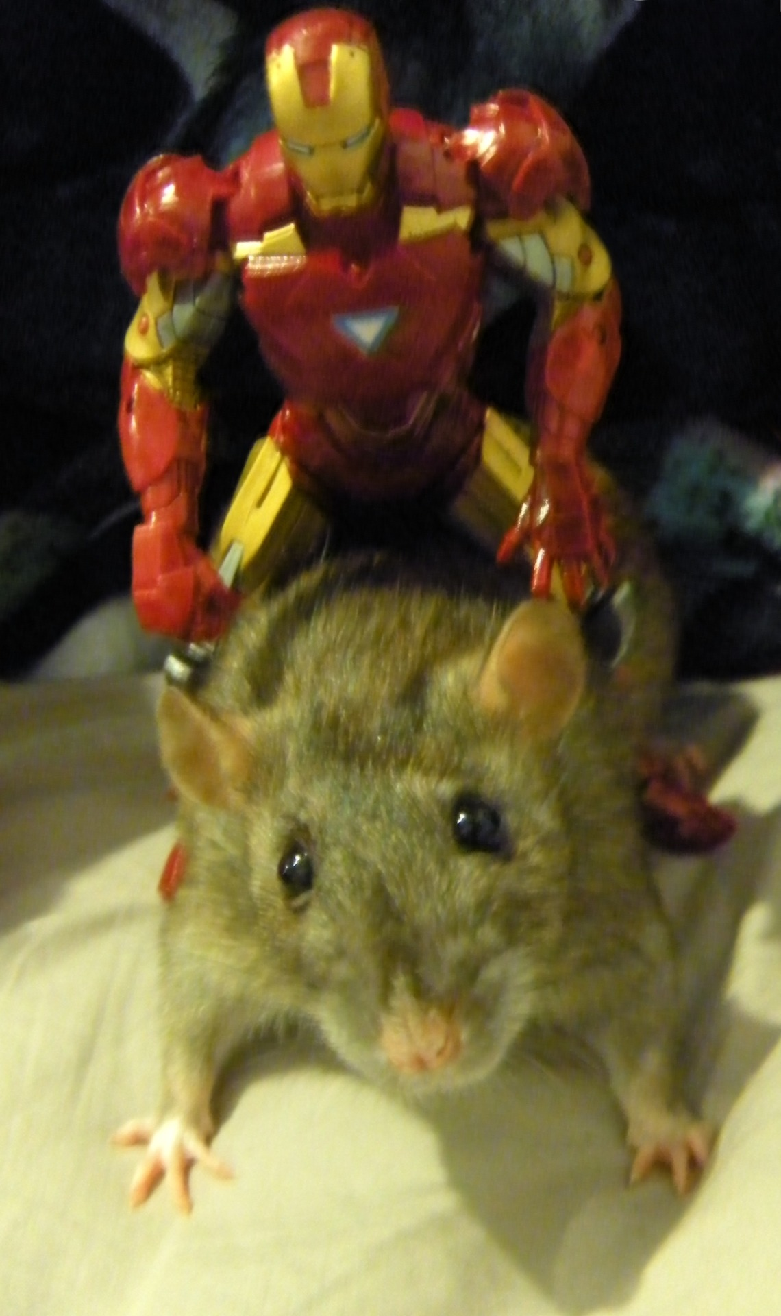 littlepierrot:  Tony: Too drunk to fly, take me home. Rat: Mkay