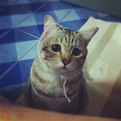 Are u angry me,papa? 😥 #cat #pochi #funny #face #cute #catstagram  (Taken with instagram)