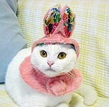 "The tailor of a cat CAT PRIN ""Cats to become a rabbit should gather immediately now here. This is the hat and shawl for disguising oneself."" This is some of the best Engrish in the history of Engrish. You simply must read the rest."