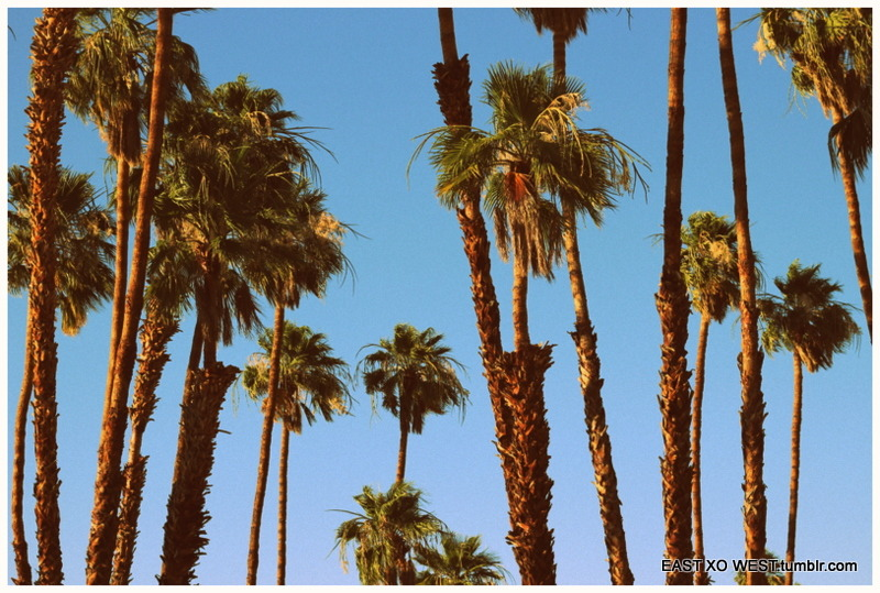 Palm spring Palm trees California