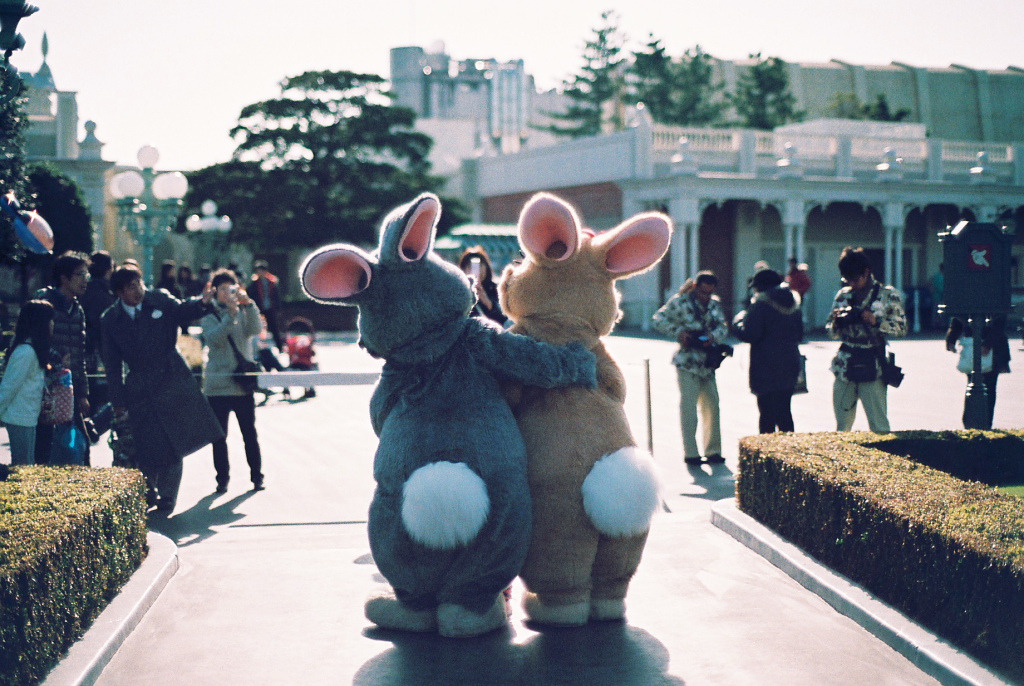 perfectmadness:  Thumper and Miss Bunny (by hambello)