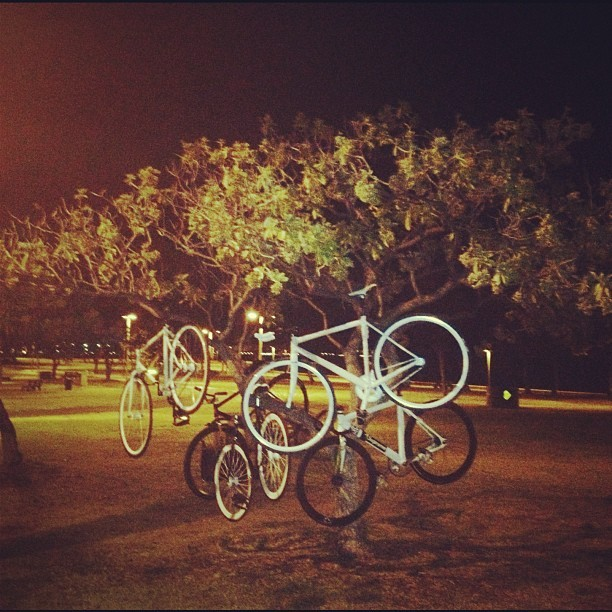 Oh Christmas tree. Oh Christmas tree. #fixedgear #fixie #tree #shoots  (Taken with instagram)