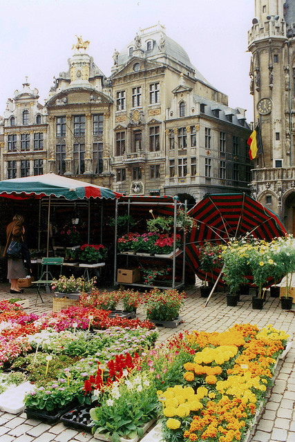 ysvoice:  | ♕ |  Flower Market - Grand-Place, Brussels  | by © Patrick  Early on summer mornings, Brussels' Grand-Place is turned into a giant flower market. One of the many Guildhalls serves as the backdrop to this floral scene.
