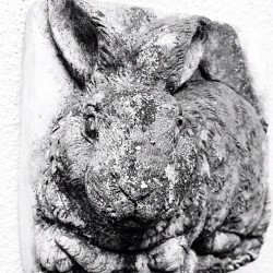 sweet little rabbit plaque #foundart #rabbit #sculpture #stone #bunny #igmasters #tashsebastian #statigram #igers  (Taken with instagram)