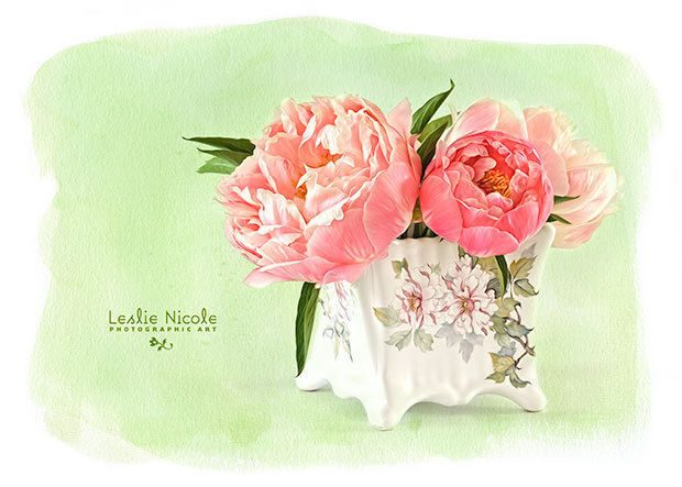 Coral Charm peonies from the garden. Texture: French Kiss Collections