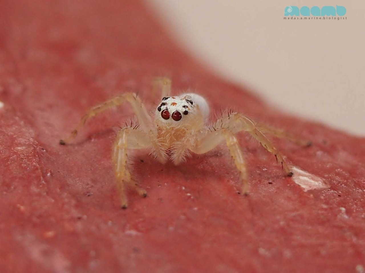 Cutie pie spider allows me to indulge in some much missed macro photography!