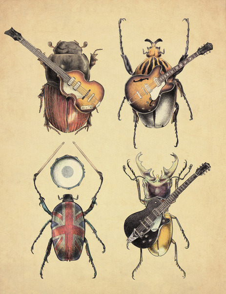 fer1972:  Meet the Beetles by Eric Fan