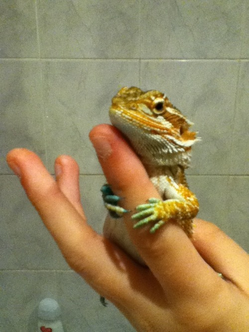 givemeyourhand-this-is-the-end:  Charizard after his bath :)