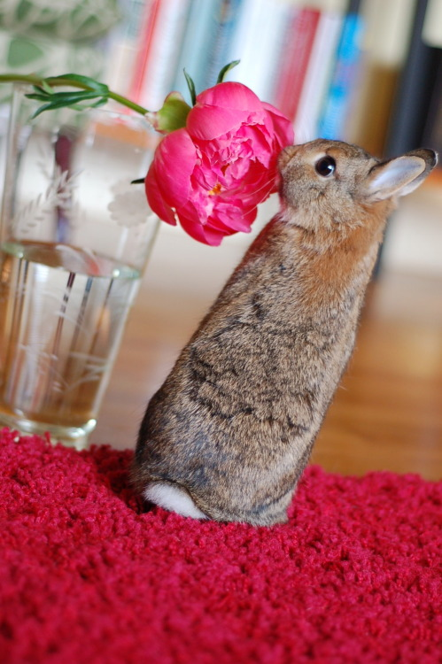 dailybunny:  You Are Pretty, Flower, But I'm Prettier Thanks, Meredith!