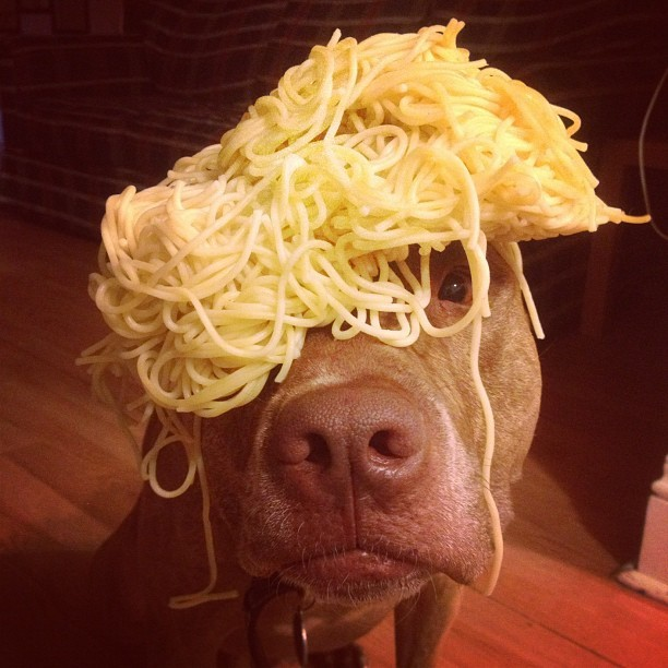 #stuffonscoutshead - #foodporn #spaghettihat @trentgbarker this ones for you (Taken with instagram)