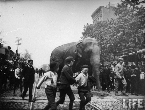 Three boys walking near an elephant from the Barnes Circus which is walking down the middle of Atlantic St. near Nevins, Brooklyn, June 1891