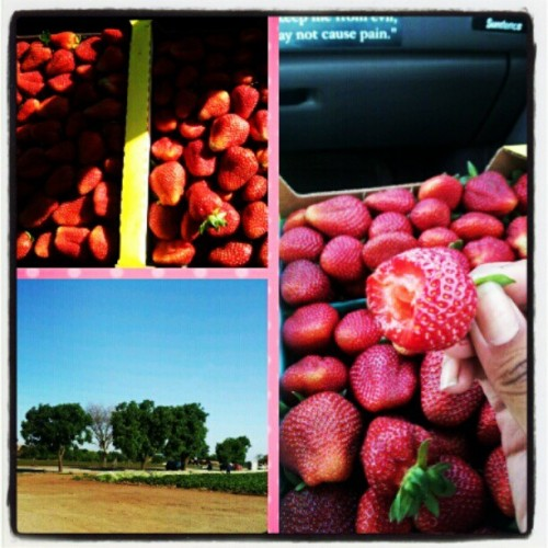 Fresh picked strawberries!! Straight from the farm.. To my tummy.. NoM NoM NoM (Taken with instagram)