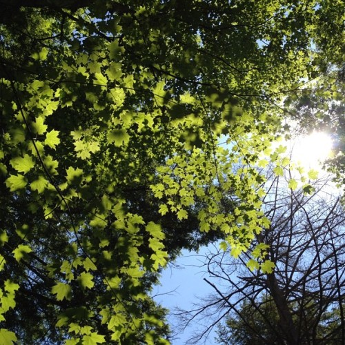 #Leaves, #sun & #LensFlare. Got to love #NoFilter (Taken with Instagram at Steep Rock)