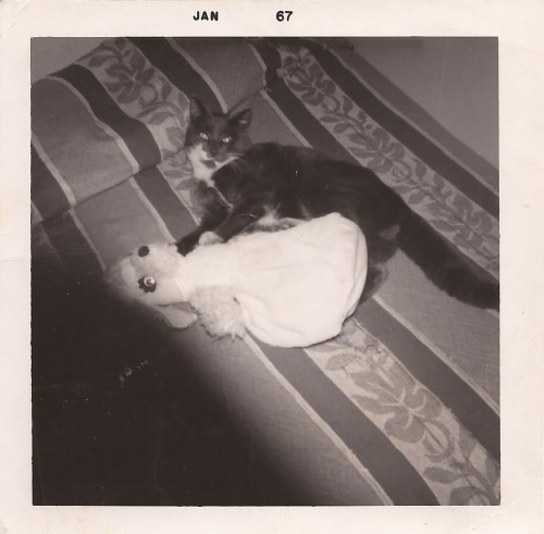 Kathie's Cat - Mittens JAN 67