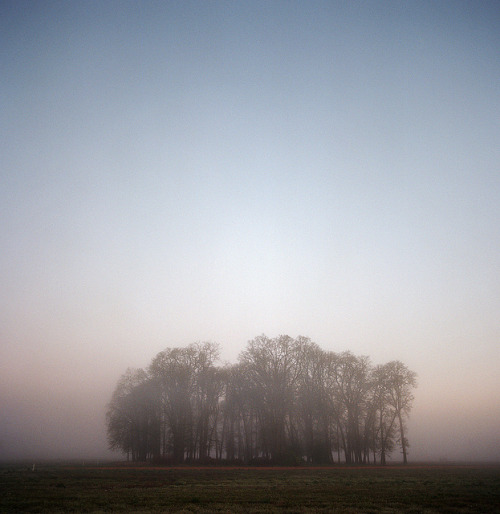 the meeting of trees by manyfires on Flickr.