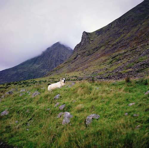 pastured at the foot of the highest peak in ireland by manyfires on Flickr.