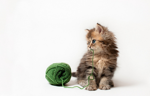 cybergata:  Daisy and Yarn by torode on Flickr.
