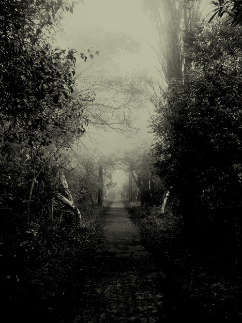 zoydphotography:  Zoyd Photography - Nature Series (2008)