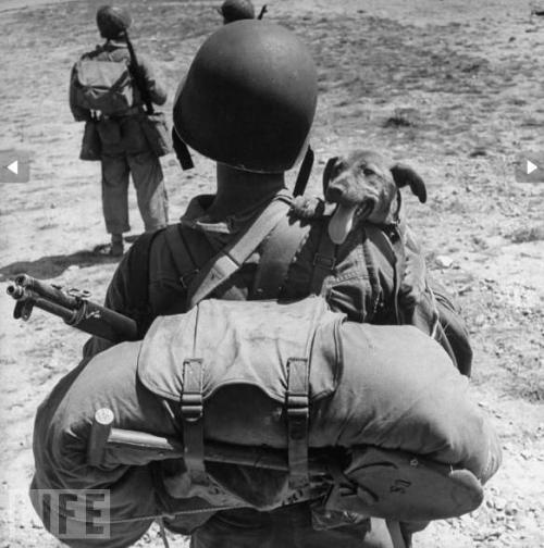 menandtheirdogs:  1bohemian:  U.S marine, Second World War