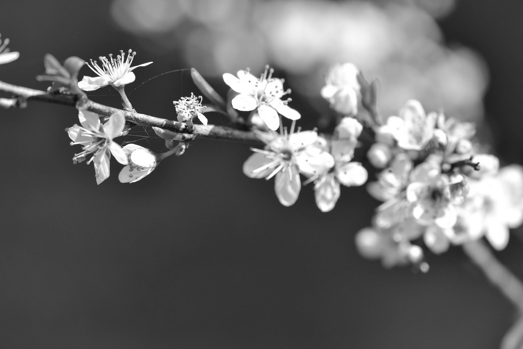black-and-white:  ~ (by Lo766)