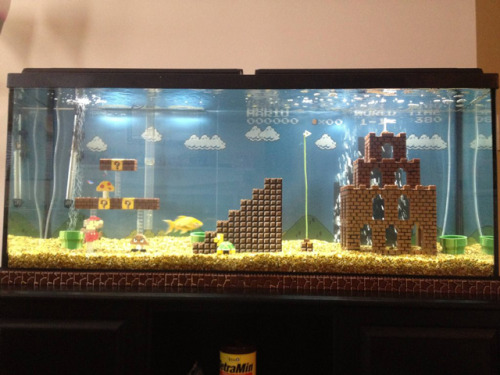 laughingsquid:  Awesome Super Mario Bros. Fish Tank Made with LEGOs  Wouldn't it be cooler if they had done the underwater mario brothers levels? I mean I guess it's not as iconic but it'd make more sense. And you could even make at the top of the tank the level with the jumping fish on the bridges. Someone give me some legos and artistic talent and lets make this happen.