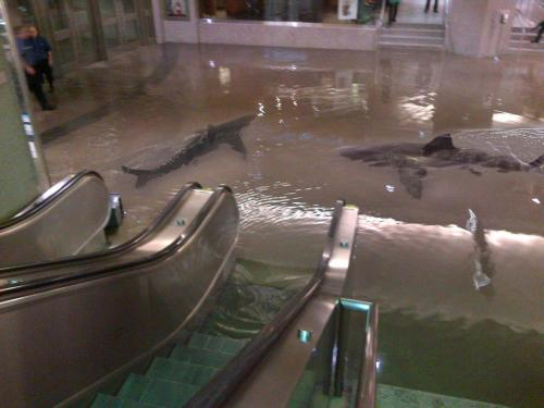 ludakriskingdom:  WTF? Are those sharks swimming in a flooded shopping centre?????