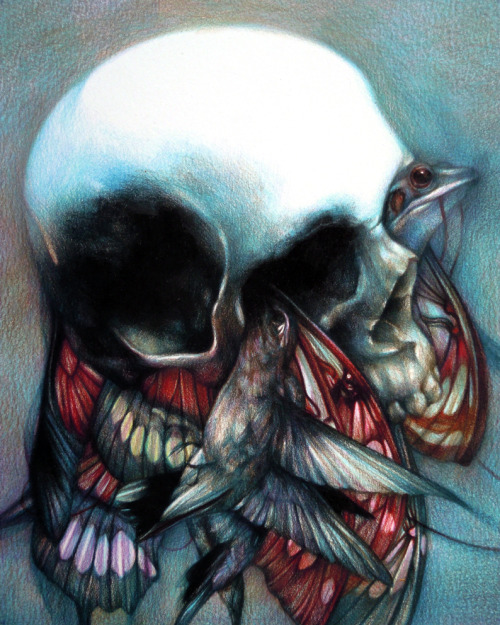 """Dévore II"" 2012, colored pencils on paper, cm 25x20 ""Kingdom Animalia"" June 29th, Big Life Foundation L.A."