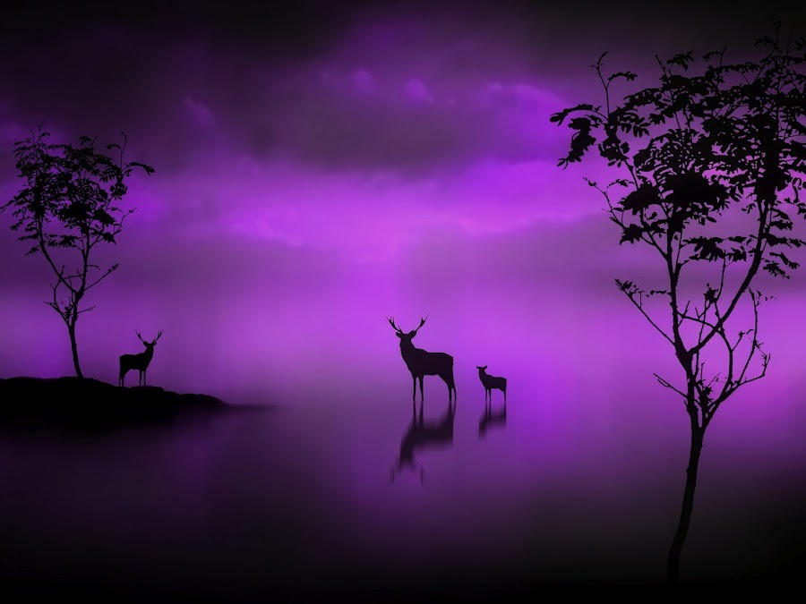 struckbystars:  (via The Deer at Midnight - Jennifer Woodward's Image | Pixoto)