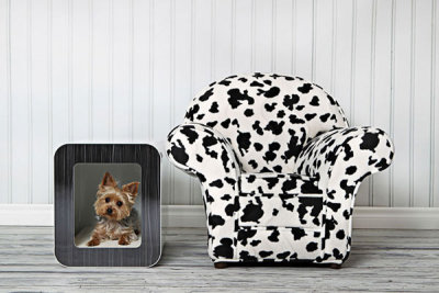 How To Make Your Pet Comfortable In A Modern Home