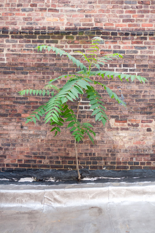 Plant growing out of brick wall.