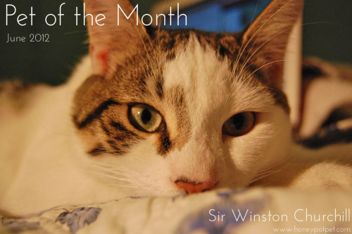 "Whoot! Whoot! We are so excited to welcome Sir Winston Churchill to Honey Pot! This furry cutie pie is our Pet of the Month for June 2012.  So what makes Sir Winston Churchill oh so special?…. ""Sir Winston Churchill, Winston for short, is almost 1 year old. Winston is my very first pet after leaving my parents home for University. He is a very playful and loyal boy, and makes the perfect companion. He LOVES to eat and go on adventures, as well as meet other animals. Who would have thought that this little guy could have such a huge impact on my life? I love him to bits."" - Courtney Boudreau"